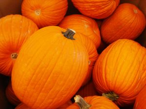 Pumpkins Charlotte Injury Lawyer Property Injury Attorney