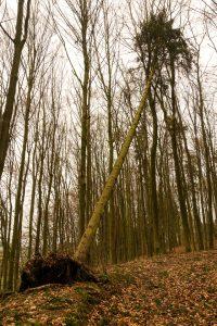 fallen-tree-Charlotte-Mooresville-Monroe-Personal-Injury-Lawyer-200x300