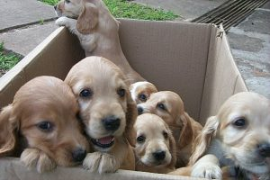 box-of-puppies-Charlotte-Monroe-Mooresville-Injury-Lawyer-300x200
