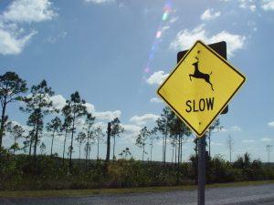 deer-crossing-Charlotte-Monroe-Mooresville-Injury-Lawyer-300x225